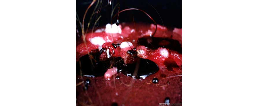12-rouge-pomme-amour-sophie-gosset